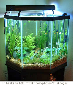 New Aquarium Information - Tropical Fish and Aquarium Advice