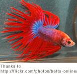 New aquarium information tropical fish and aquarium advice for Easy fish to care for