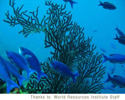 Marine algae for Cloudy fish tank water in established tank