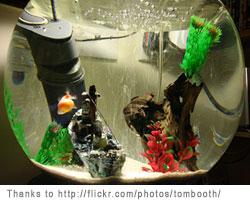 Aquarium Maintenance Freshwater Fish Tank Maintenance