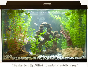 Aquarium Maintenance Freshwater Fish Tank Maintenance