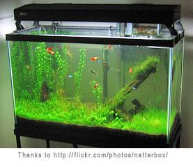 Starting A Freshwater Aquarium